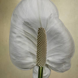 Patti Deters - Peace Lily 1.1