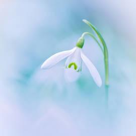 Sarah-fiona  Helme - Peace of Spring