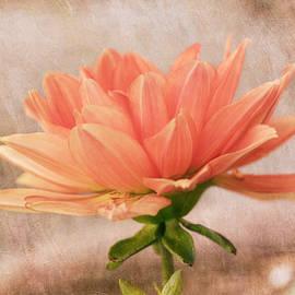 Kim Hojnacki - Peach Dahlia in the Garden