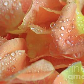 Tracy Hall - Peach Lemon Petals