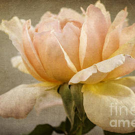 Tamara Becker - Peach Rose