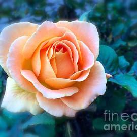 Wonju H - Peach rose