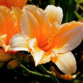 Clara Darlene Reger - Peachy Daylily