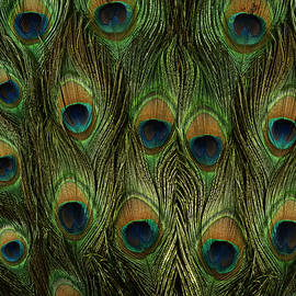 Georgeta Blanaru - Peacock Feathers Photography
