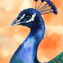Peacock Painting - Alison Fennell