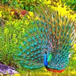 Catherine Lott - Peacock Posing