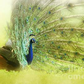 Deborah Berry - Peacock Profile