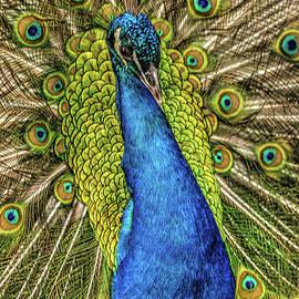 John Straton - Peacock  v2