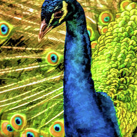John Straton - Peacock  v3