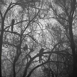 Denise Dube - Peacocks In The Mist bw