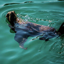 Tommy Anderson - Pebble Beach California Seal