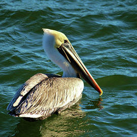Cynthia Guinn - Pelican Beauty