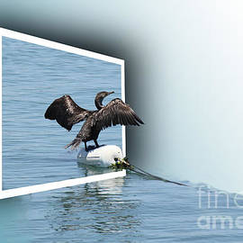 Robin  Waters - Pelican Escape