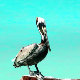 Nannie Van der Wal - Pelican on a boat