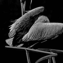 Deborah Benoit - Pelican On Chrome