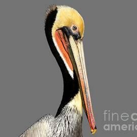 Susan Wiedmann - Pelican Posing