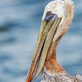 John Radosevich - Pelican Profile