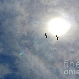 Charlotte Stevenson - Pelican Sky
