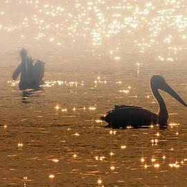 Mike  Dawson - Pelican Sunrise