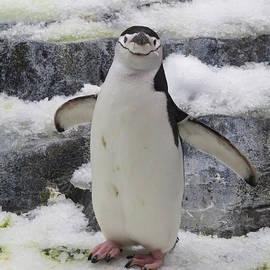 Douglas Martin - Penguin