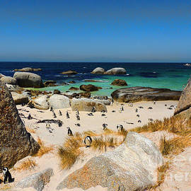 Tanja Riedel - Penguins on Simons Beach