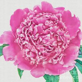 Olga Hamilton - Peony Flower