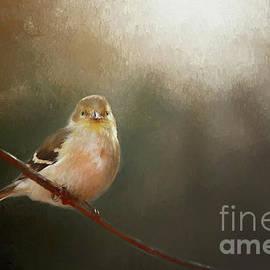 Darren Fisher - Perched Goldfinch