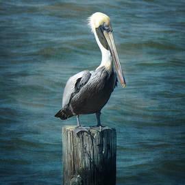 Carla Parris - Perched Pelican