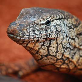Michelle Wrighton - Perentie Monitor Lizard Color