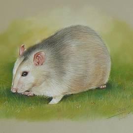 Teddy Bojinov - Pet Portrait