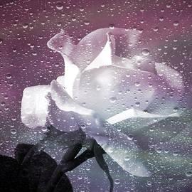 Julie Palencia - Petals and Drops