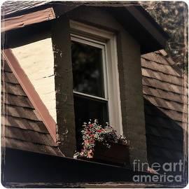 Frank J Casella - Petals in the View - Color