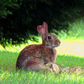 Gardening Perfection - Peter Cottontail