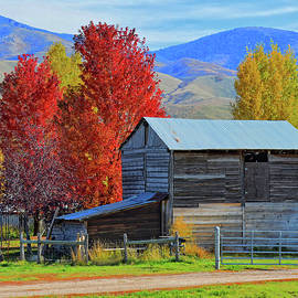 Dilectus Rex - Peterson Barn in Autumn