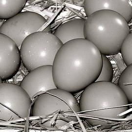 Karon Melillo DeVega - Pheasant Eggs
