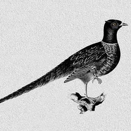 Pheasant - Mark Rogan