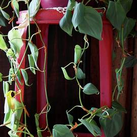 John Myers - Philodendrons On Red Chair