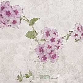 Phlox, Perfume And Lace