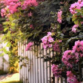 Jessica Jenney - Picket Fence Floral
