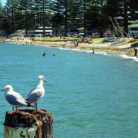 Pilot Bay Beach 4 - Mount Maunganui Tauranga New Zealand