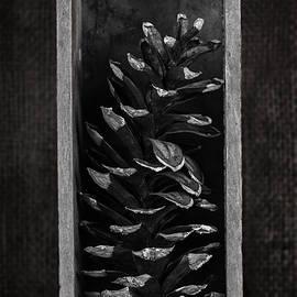 Pine Cone in a Box Still Life - Tom Mc Nemar