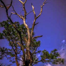 Claudia M Photography - Pine snag