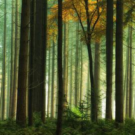 Pine Tree Forest - Martin Podt