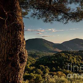 Robert Brown - Pine Tree near Mt Ventoux.
