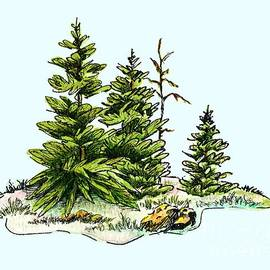 Dale Jackson - Pine Tree Watercolor Ink Image I