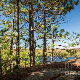 Pines on sunny cliff - Elena Elisseeva