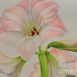 Sharon Patterson - Pink Amaryllis