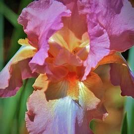 Cynthia Guinn - Pink And Orange Iris