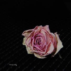 Randi Grace Nilsberg - Pink and Pale