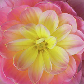 Mary Jo Allen - Pink and Yellow Dahlia